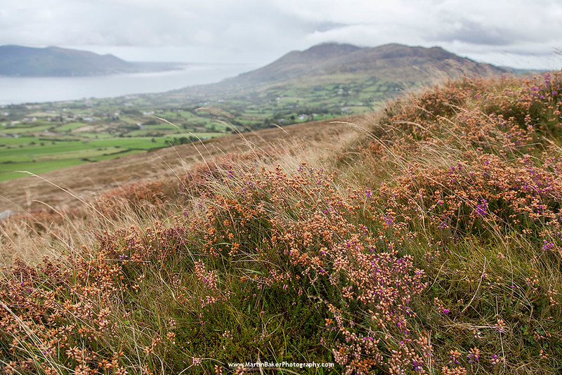 Slieve Foye and Carlingford Lough, Cooley Peninsula, Louth, Ireland.