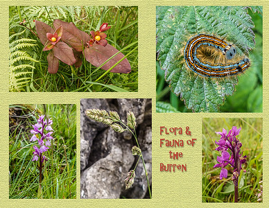 Flora and Fauna, Burren Nat'l Park