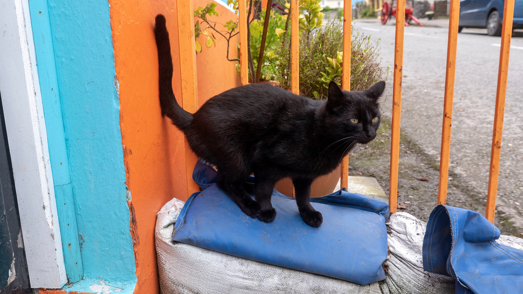 Knightstown, Valentia Island - Black cat at Donal & Rosie Walsh's Foodstore