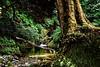 Glendalough Cascade