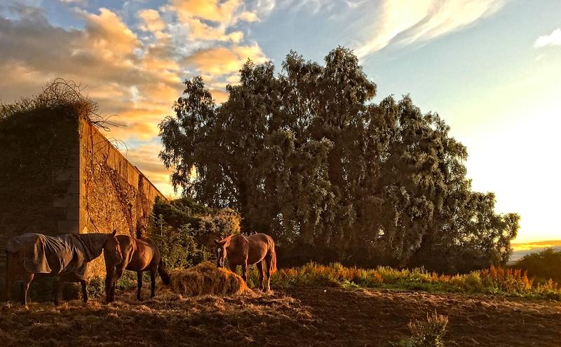 Horse Pasture at Sunset