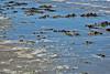 Bull Island Sea Weed & Beach