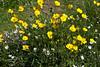 Spring Wild Flowers ~ Bull Island, Ireland