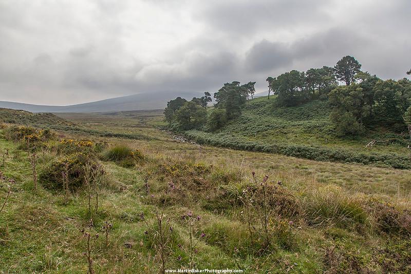 River Liffey Valley, The Sally Gap, Wicklow, Ireland.