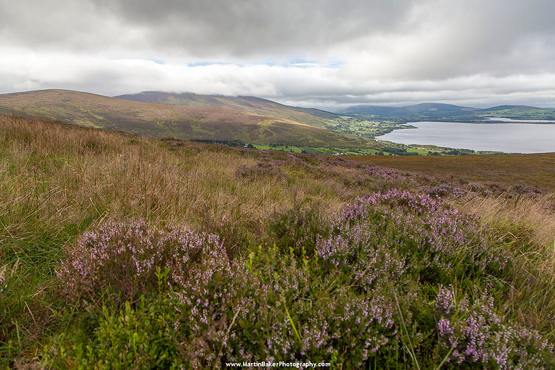 Sorrel Hill, Black Hill, Moanbane Mountain and Pollaphuca Reservoir , Blessington, Wicklow, Ireland.
