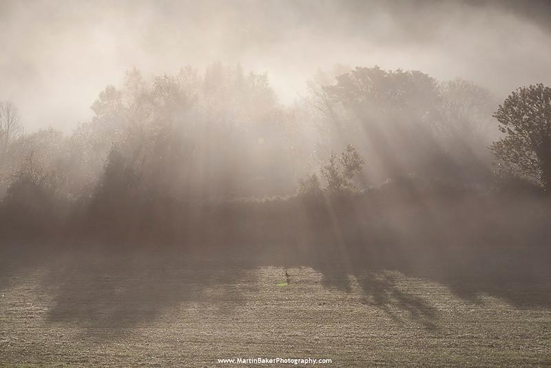 Woodenbridge, Vale Of Avoca, Wicklow, Ireland.