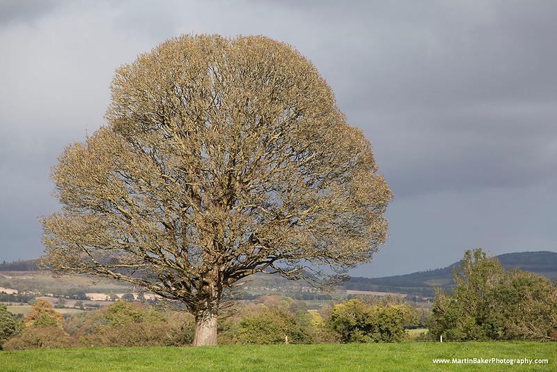 Rathdrum, Wicklow, Ireland.