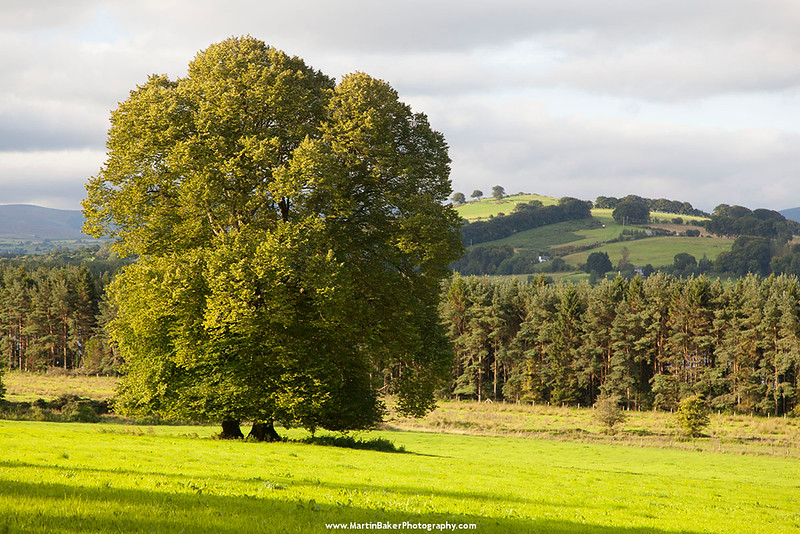 Carrig, Blessington, Wicklow, Ireland.