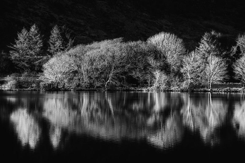 trees with winter reflections