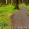 Sitka Pine Path-Gougane Barra, Ireland