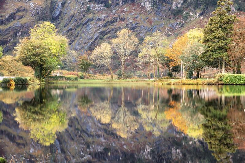 Trees at Gouganebarra reflected