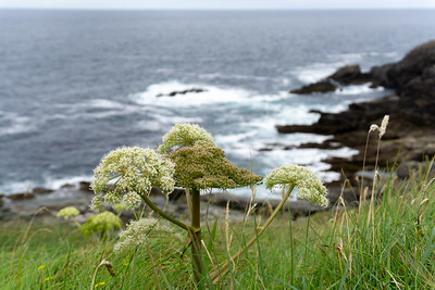 Looking out at Malin Head, Ireland