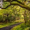 Muckross Path