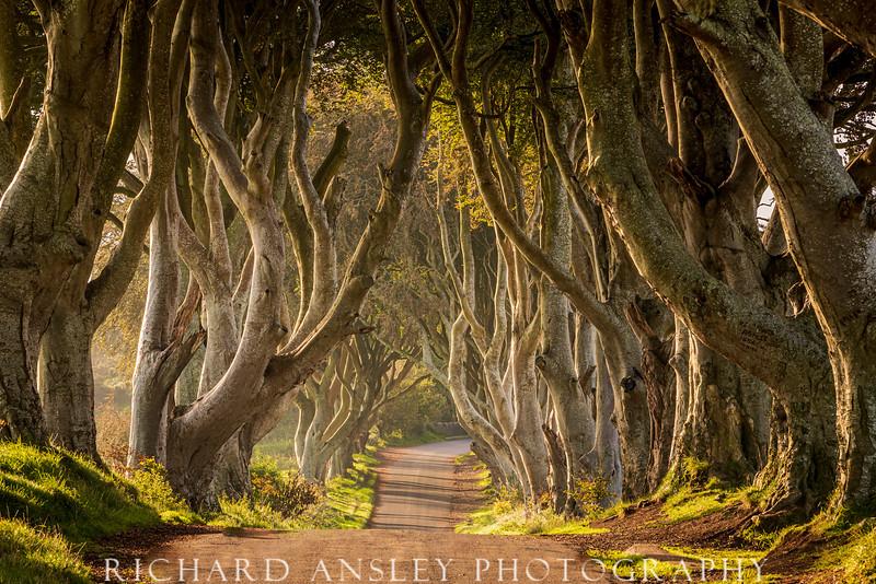 Dark Hedges 1-Northern Ireland