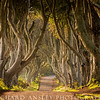 Dark Hedges 1-Northern Ireland