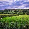 Sheepy Hills