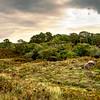 Killarney Hills