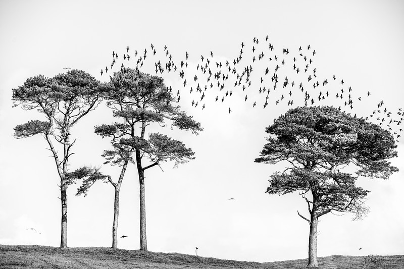 Birds and trees in Cork