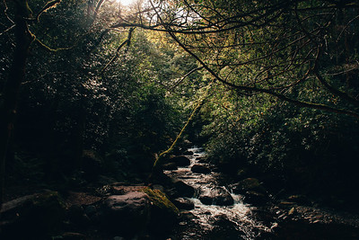 Sun Light Breaking into a Dark Irish Forest