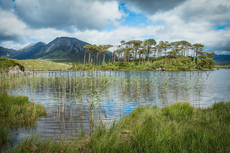 Twelve Pines Island, Berryclare Lough, Ireland
