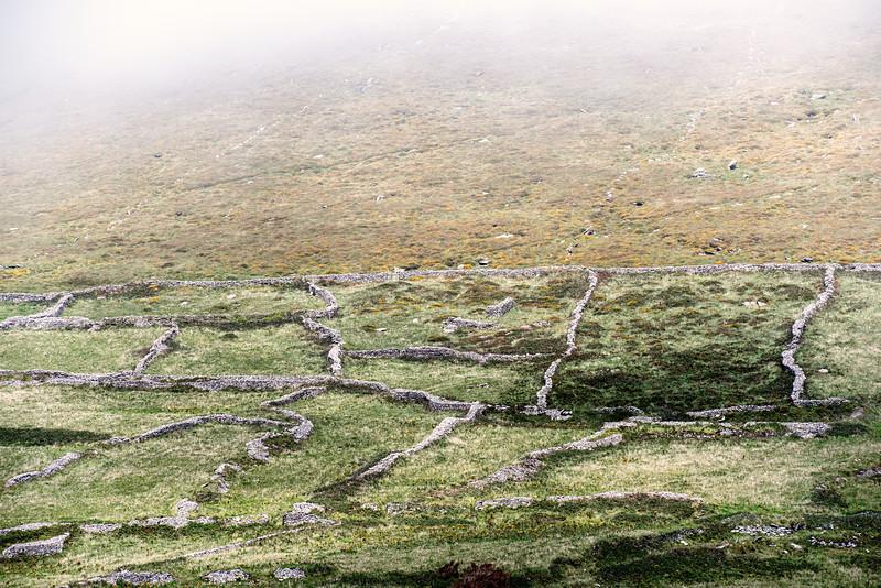 Dingle field boundaries