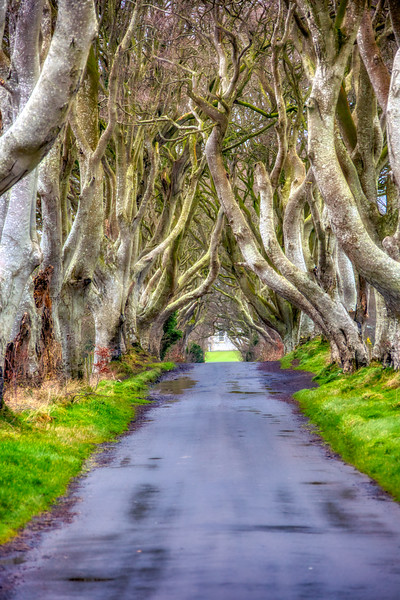 The Dark Hedges - Northern Ireland 045