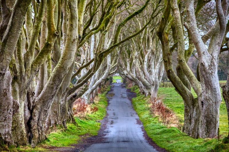 The Dark Hedges - Northern Ireland 023