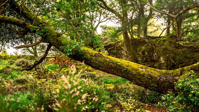 Trunk Moss