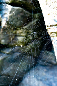 Spider web in the rocks, Malin Head, Ireland