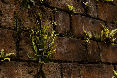 Plant Growing Out of a Brick Wall