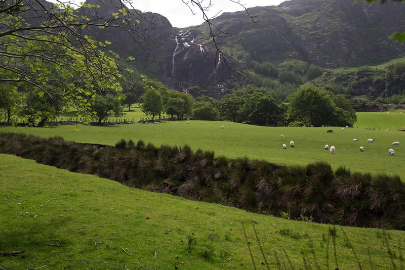 Uragh Wood.  Beara Peninsula.  Near Glenbeg, County Kerry, Ireland.
