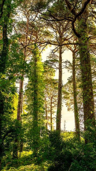 Killarney Forest