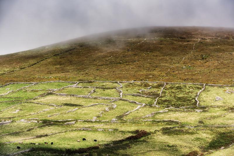 Ancient field boundaries, Dingle