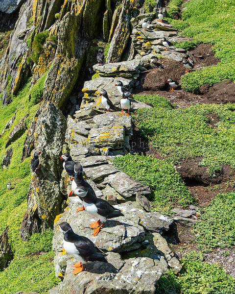 Puffin Perch , Skellig Michael , Ireland