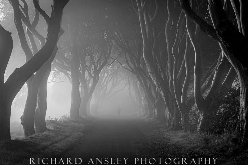 Dark Hedges 2-Northern Ireland