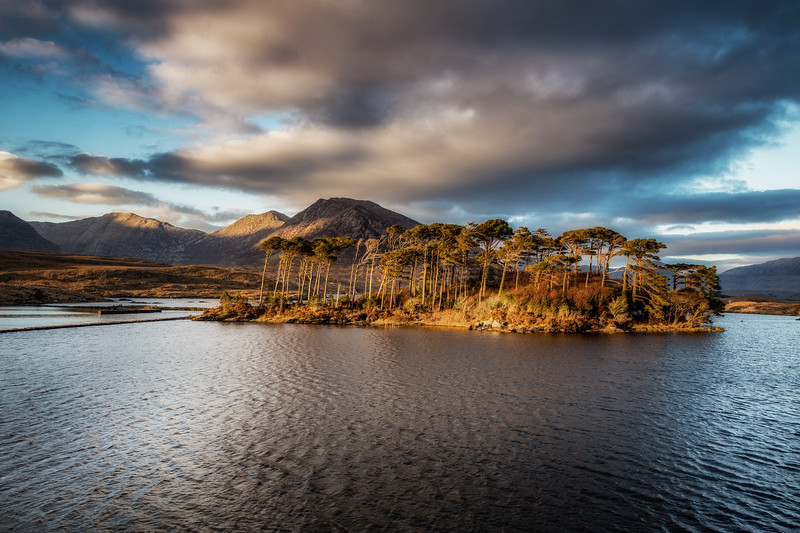 The pines of Derryclare