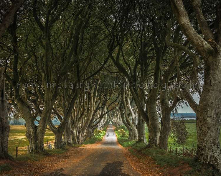 The Dark Hedges at Sunrise , Ballymoney , Northern Ireland