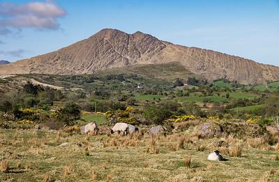 Hills near Kenmare
