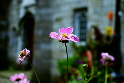 Flowers near Dublin Castle
