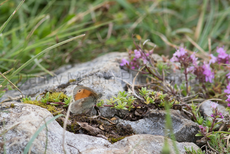 Small Heath<br /> County Clare, Ireland