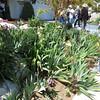The 3rd garden