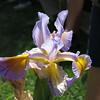 Seedling #06-15