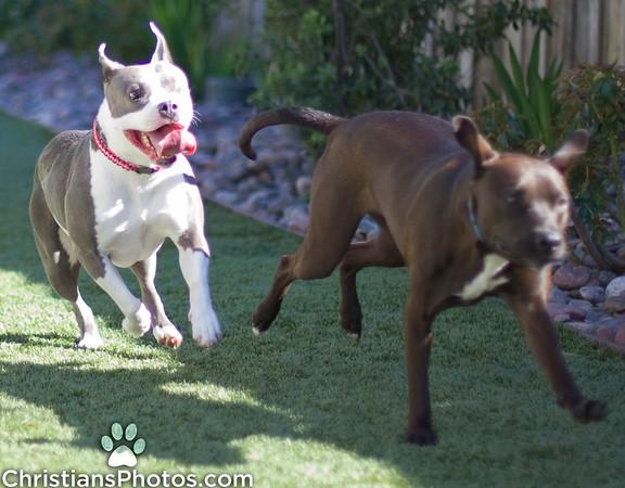 Iris chasing her kids around
