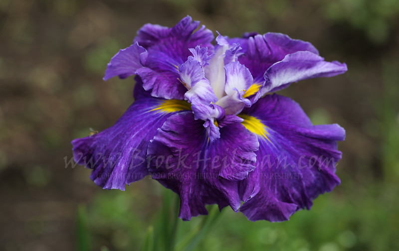 'Frosted Intrigue'