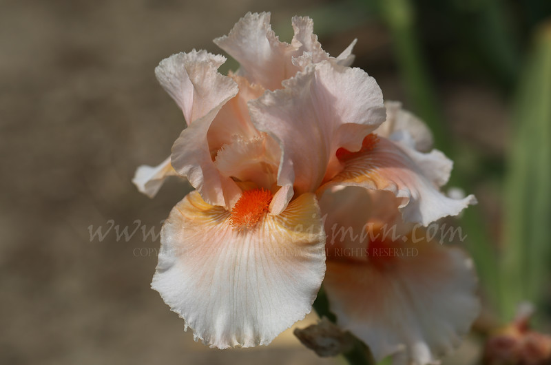'Tropical Passion'