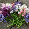 hyacinths including 'Woodstock' and 'Gypsy Queen'