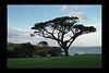 Irish TreeScape (Black border-all sides)
