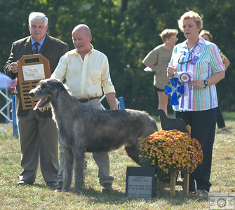 Reserve Winners Dog - Big Hill Lincoln