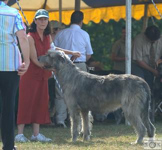 AmBred dog, 2nd place - Eirian's Iowerth Connor Olynn