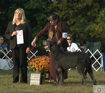6-9 month dog winner (sweeps) - Wolfhaven Aint No Fool at O'Lugh